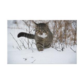 winter cat canvas print