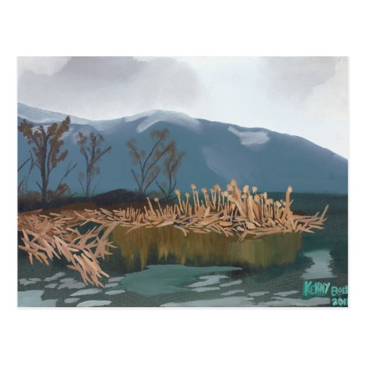 Winter Cattails Postcard