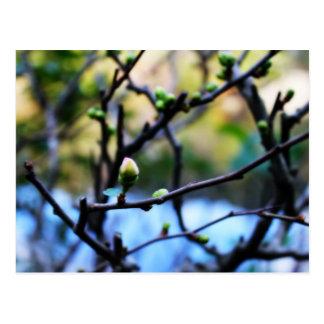 Winter cherry blossom postcard