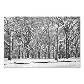 """""""Winter Contrasts"""" Central Park Photo Print"""
