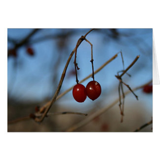 Winter Cranberry Greeting Cards