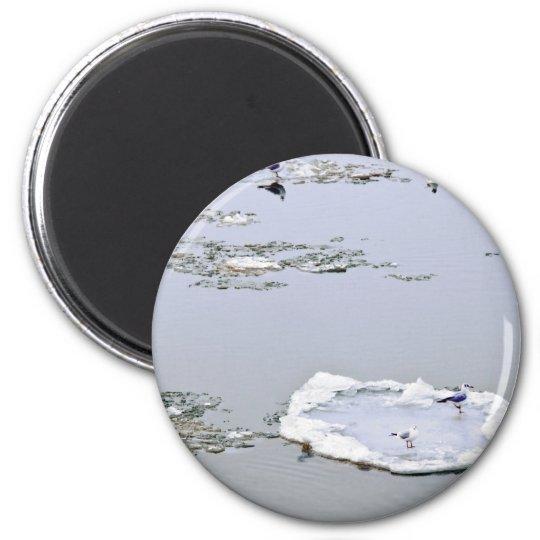 winter - danube river in frosty day magnet