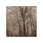 Winter Day Wood Prints