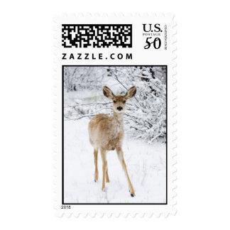 Winter Doe Postage