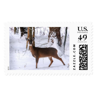 Winter Doe Postage Stamp