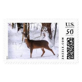 Winter Doe Postage Stamp