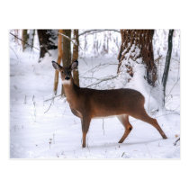 Winter Doe Postcard