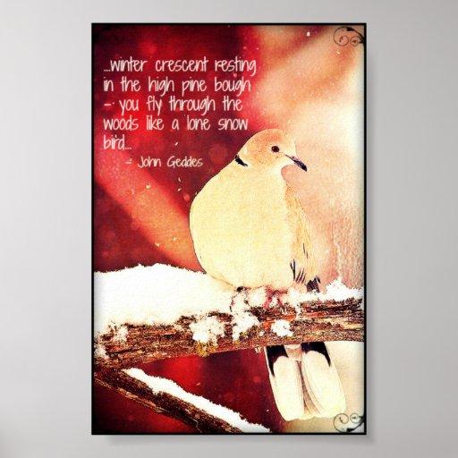 Winter Dove - print