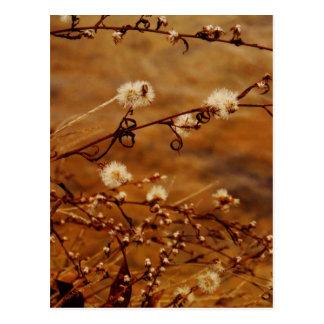 Winter Dry Wildflowers at Lake Postcard