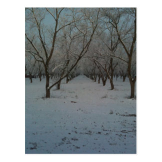 Winter Dusting Postcard