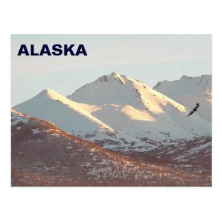 Winter Eagle Postcard