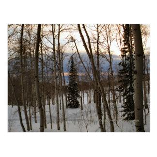 Winter Evening Postcard