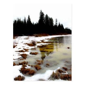 """Winter fades"" Postcard"
