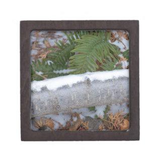 Winter Fern Keepsake Box