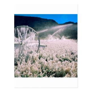 Winter Field Ice Postcard