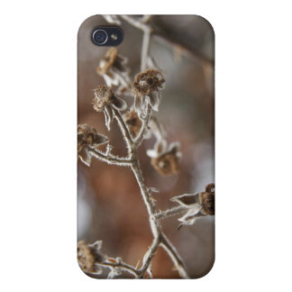 Winter flora iPhone 4/4S cover