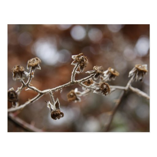 Winter flora postcard