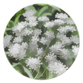 Winter Flowers In Tiberias, Israel Plate