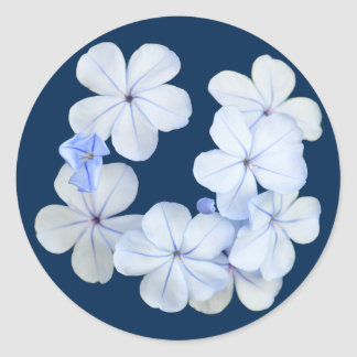 Winter Flowers In Tiberias, Israel Sticker
