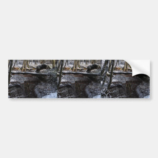 Winter Forest Brook Bumper Stickers