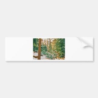 Winter Forest Golden Light Bumper Sticker