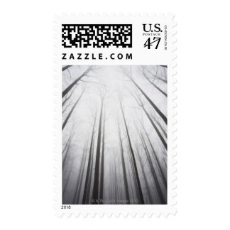 Winter forest in mist, New Jersey Postage
