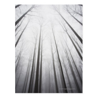 Winter forest in mist, New Jersey Post Card