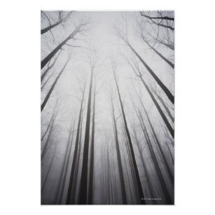 Winter forest in mist, New Jersey Poster