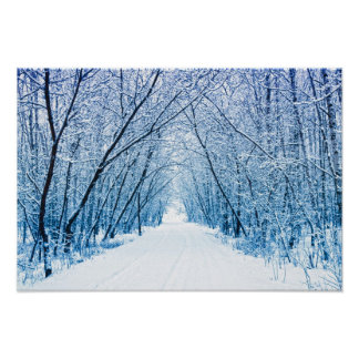 Winter Forest Path Posters