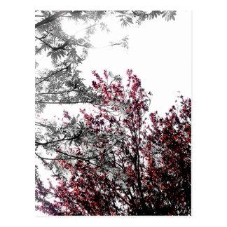 Winter Forest Postcard