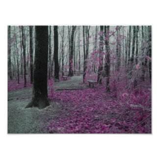 Winter Forest Posters