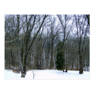 Winter Forest Scenery Post Cards