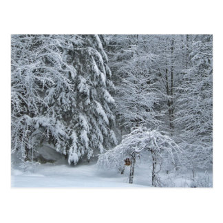 Winter Forest Snow Covered Landscape Photography Postcard