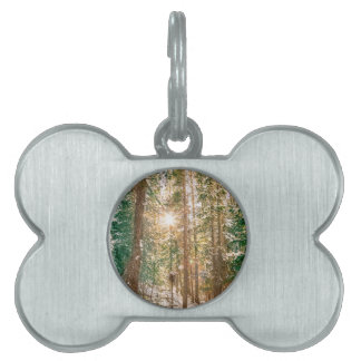 Winter Forest Sunshine Pet ID Tag