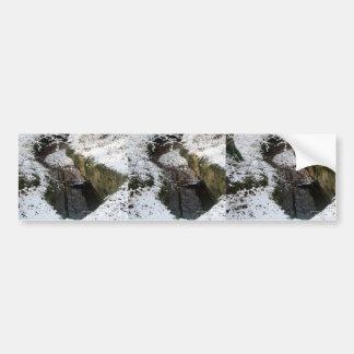 Winter Forest Water Reflection Bumper Sticker