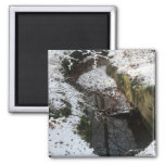 Winter Forest Water Reflection Magnet