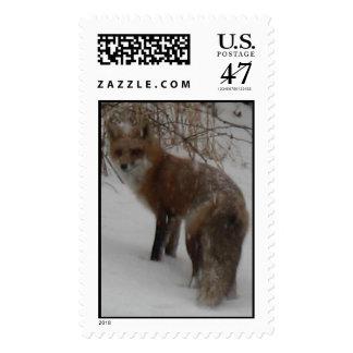 Winter Fox Postage Stamp