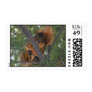 Winter Fox Squirrel In Pine Tree Postage