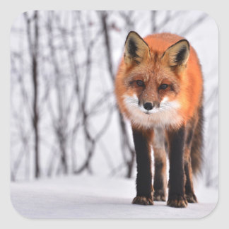 winter fox wrapping paper, woodland gift wrap square sticker