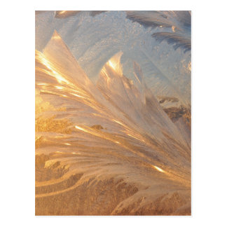 Winter Frost on Glass Postcard
