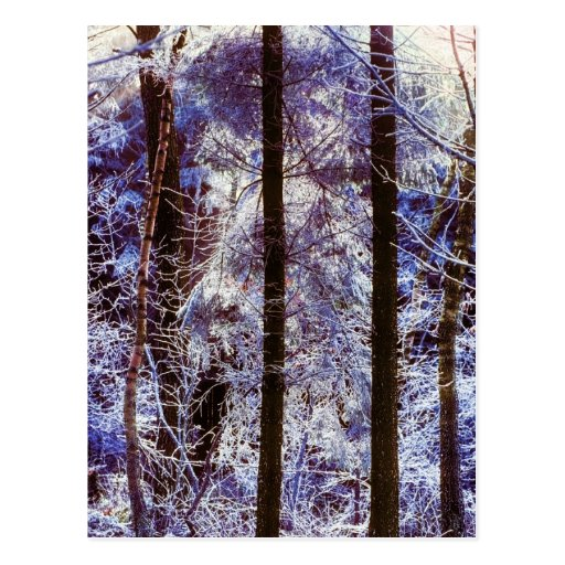 Winter Frosty Forest Morning Switzerland Post Cards
