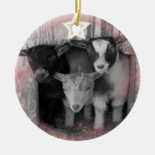winter goat babies christmas ornament