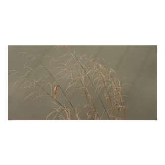 Winter Grass Card