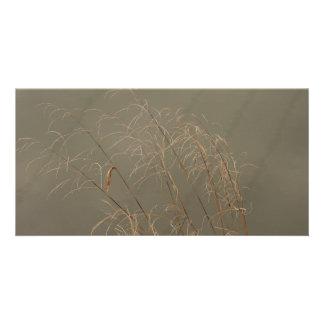 Winter Grass Photo Card