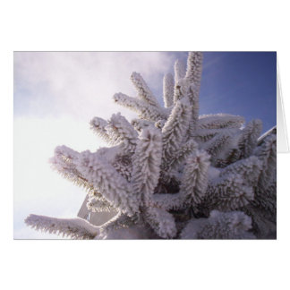 Winter Greeting Greeting Cards