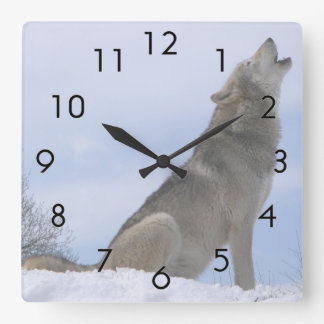 Winter Grey Wolf Howling Square Wall Clock