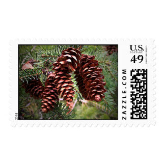 Winter Holiday Pinecone Evergreen Christmas 2017 Postage