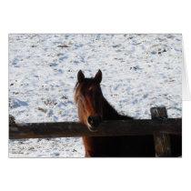 Winter Horse, Christmas Card