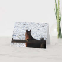 Winter Horse, Christmas Holiday Card