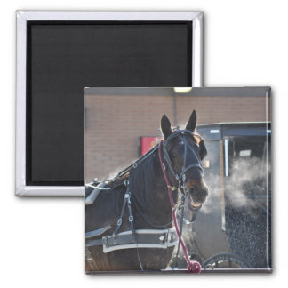 Winter Horse Hitch 2 Inch Square Magnet